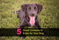 5 Great Contests to Enter for Your Dog