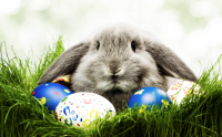 5 Easter Sweepstakes to Enter Today!